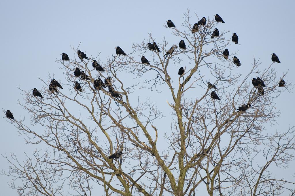 Sechster Vogelgrippefall in Hessen