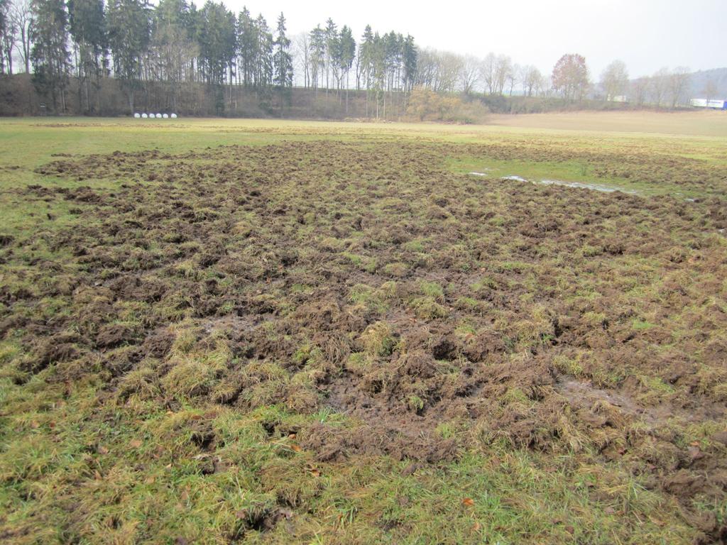 Grünlandschäden vom Schwarzwild