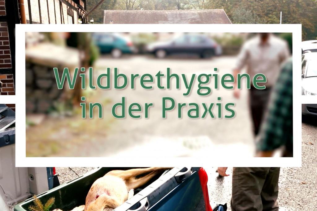 DJV-Videoserie: Wildbrethygiene beim Schwarzwild
