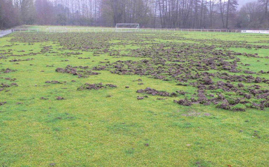 Schwarzwild zerstört Fußballplatz in Herborn-Burg: Spendenaufruf!