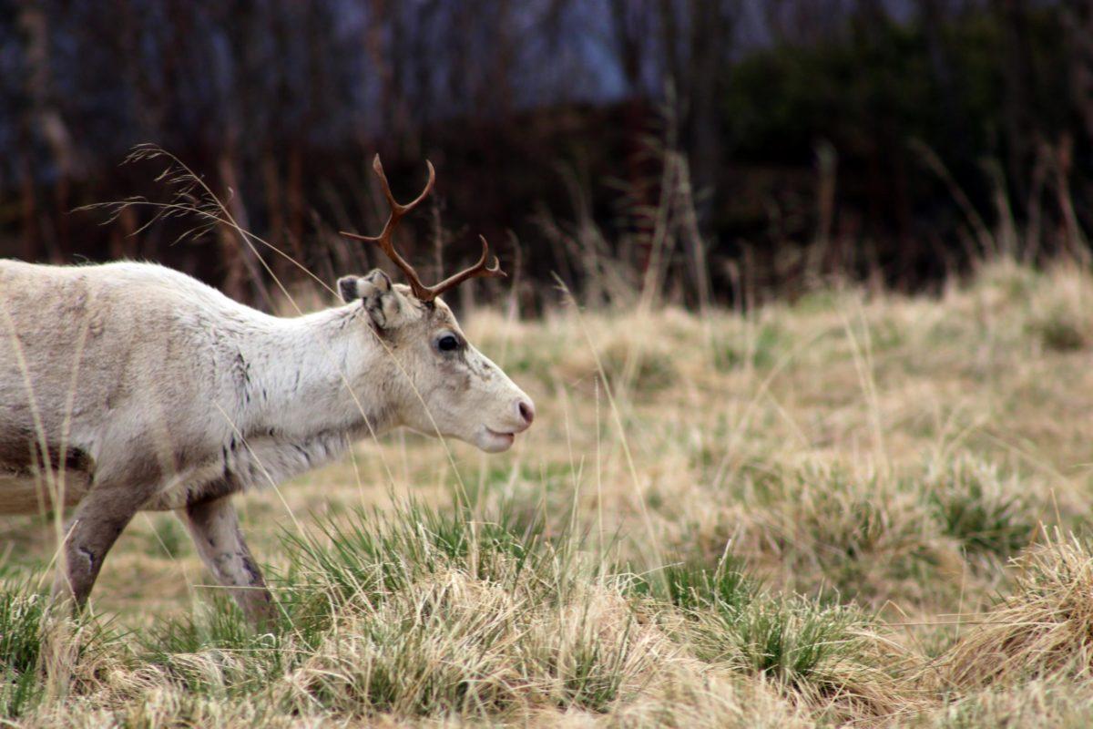 Link korrigiert: Jagdverband unterstützt Studie zur Chronischen Auszehrungskrankheit