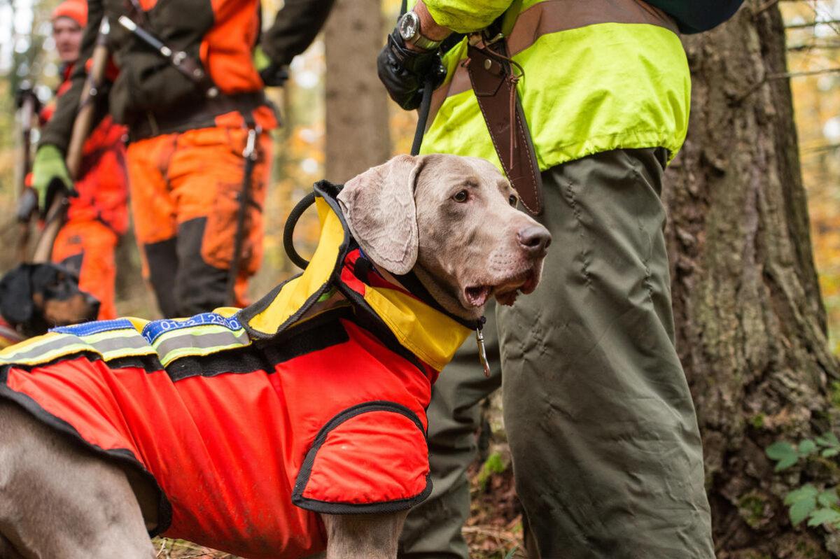 Jäger und Falkner gegen Antibiotika-Verbot für Haustiere